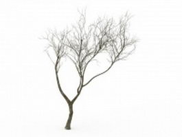 Bare tree 3d model preview