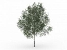 Texas ash tree 3d model preview