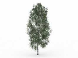 California ash 3d model preview