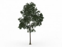 English walnut tree 3d model preview
