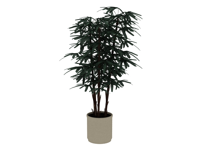 Potted bamboo plant 3d rendering