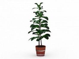 Barrel potted plants 3d preview