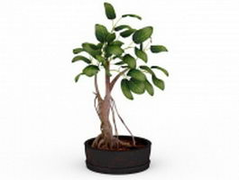 Potted bonsai tree 3d model preview