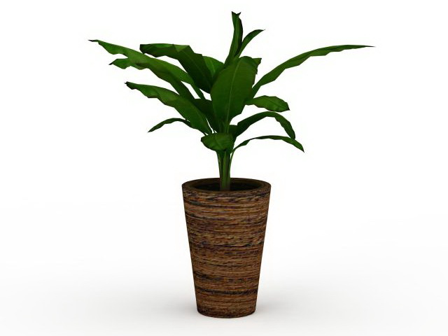 Potted broad leaved plant 3d rendering