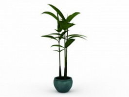 Broad leaf potted plant 3d preview
