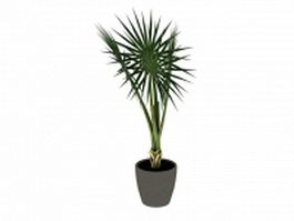 Potted fan palm tree 3d preview