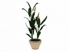 Indoor flowering plant 3d preview