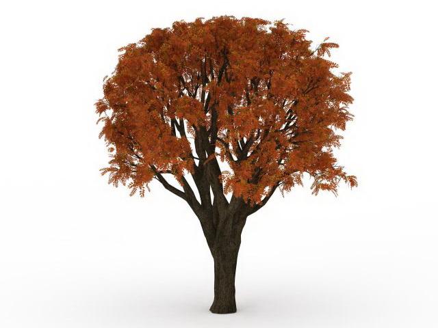 Red maple tree 3d rendering
