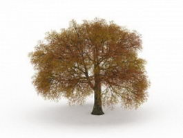 Autumn oak tree 3d model preview