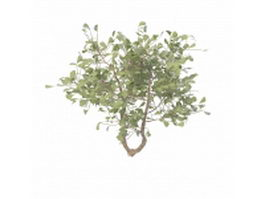 Broad-leaved evergreen tree 3d model preview