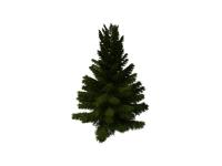Coniferous pine tree 3d model preview