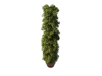 Tall potted plant 3d preview