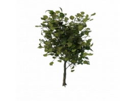 Decorative tree for landscaping 3d model preview