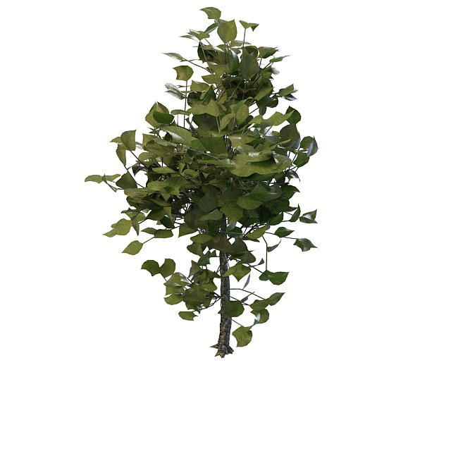 Decorative tree for landscaping 3d rendering