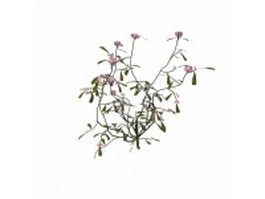 Pink flowering herb 3d preview