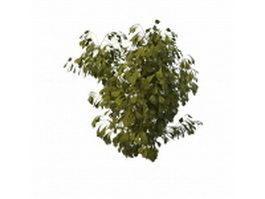 Poplar tree branch 3d preview