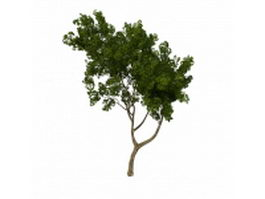 Small tree for front yard 3d model preview