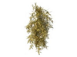 Variegated willow shrub 3d model preview
