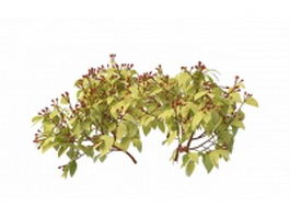 Shrub with red berry 3d model preview