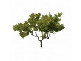 Young oak tree 3d model preview