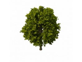 Lefty big tree 3d model preview