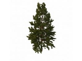 Northern white pine tree 3d model preview