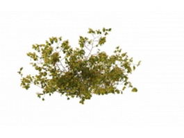 Yellow berry bushes 3d preview