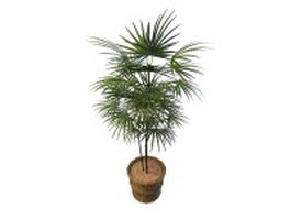 Potted fan palm tree plant 3d preview