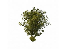 Small maidenhair tree 3d model preview