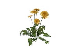 Dandelion plant with flowers 3d preview