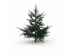 Mountain cedar tree 3d model preview