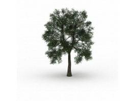 Cedar elm tree 3d model preview