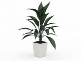 Potted broad leaf plant 3d preview