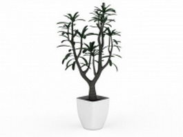 Small potted tree plant 3d preview
