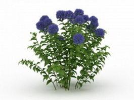 Blue Hydrangea plant 3d model preview