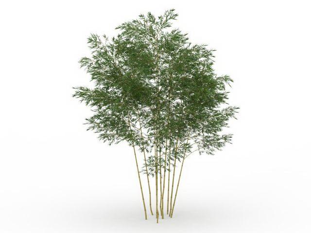 Phyllostachys bamboo 3d rendering