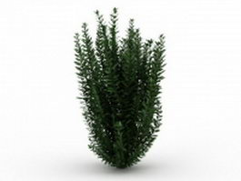 Garden privet plants 3d model preview