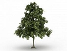 Sessile oak tree 3d model preview