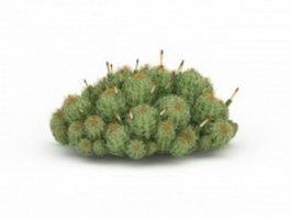 Flowering cactus plants 3d preview