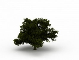 Dwarf tree with thick branches 3d model preview