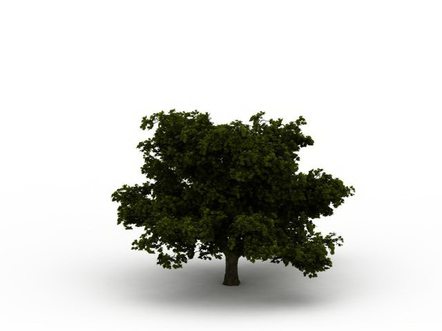 Dwarf tree with thick branches 3d rendering