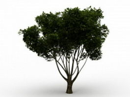 American yew tree 3d model preview