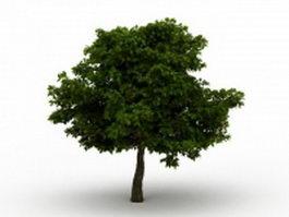 Common deciduous tree 3d model preview
