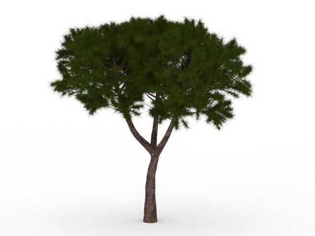 Pinyon tree 3d rendering