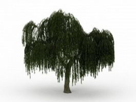 Weeping willow tree 3d model preview
