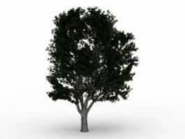 Puriri tree 3d model preview