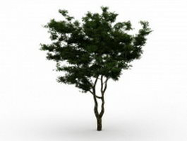 Brigalow tree 3d model preview