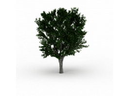 Chinese mulberry tree 3d model preview
