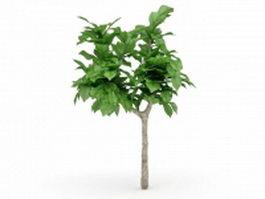 Dwarf ornamental tree 3d model preview