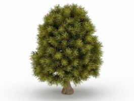 Dwarf cypress tree 3d model preview